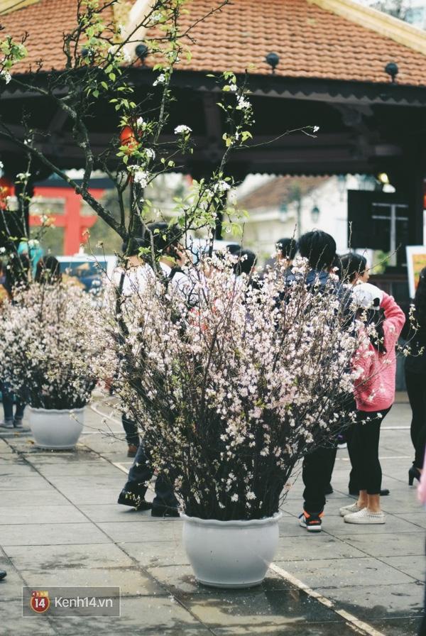 Những ngày này, chẳng cần sang Nhật, bạn vẫn có thể ngắm hoa anh đào giữa lòng Hà Nội - Ảnh 8.