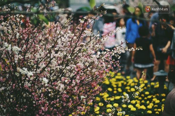 Những ngày này, chẳng cần sang Nhật, bạn vẫn có thể ngắm hoa anh đào giữa lòng Hà Nội - Ảnh 14.