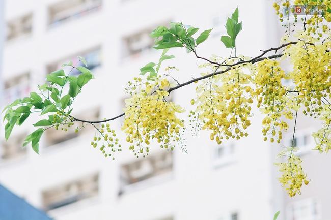 Chùm ảnh: 4 thứ hoa thật đẹp của tháng 6 Hà Nội! - Ảnh 32.