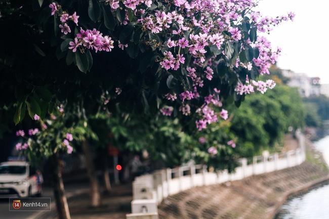 Chùm ảnh: 4 thứ hoa thật đẹp của tháng 6 Hà Nội! - Ảnh 26.