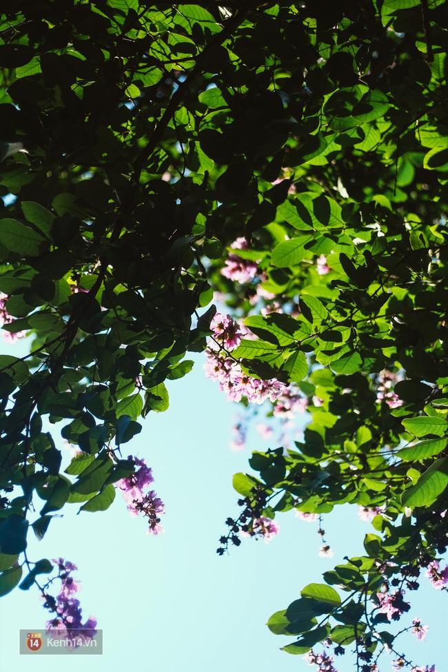 Chùm ảnh: 4 thứ hoa thật đẹp của tháng 6 Hà Nội! - Ảnh 27.