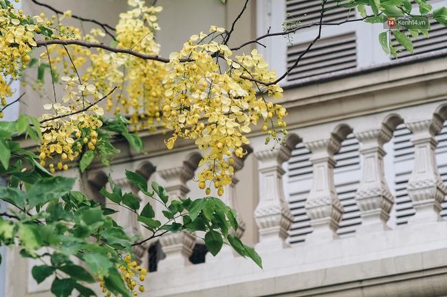 Chùm ảnh: 4 thứ hoa thật đẹp của tháng 6 Hà Nội! - Ảnh 34.