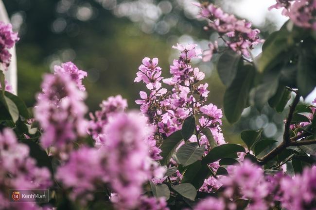 Chùm ảnh: 4 thứ hoa thật đẹp của tháng 6 Hà Nội! - Ảnh 28.