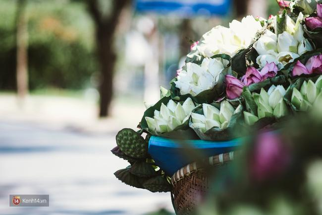 Chùm ảnh: 4 thứ hoa thật đẹp của tháng 6 Hà Nội! - Ảnh 6.