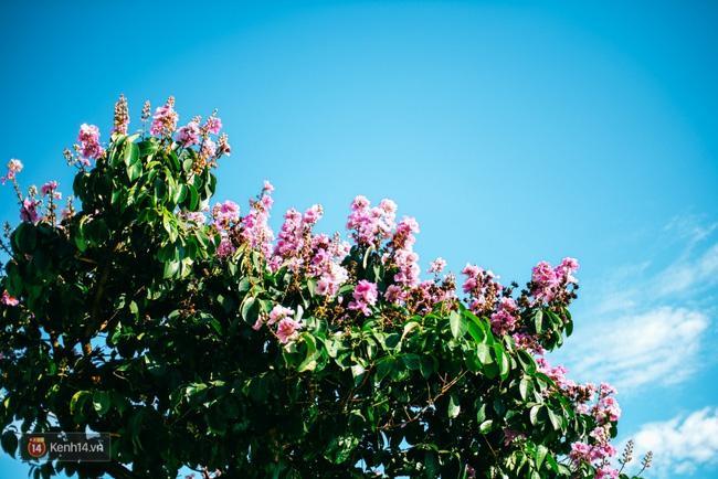 Chùm ảnh: 4 thứ hoa thật đẹp của tháng 6 Hà Nội! - Ảnh 22.