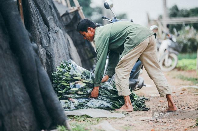 Ly, đào bung nở sớm trước Tết - Người trồng hoa ở Hà Nội điêu đứng, lo phải bán đất để trả nợ ngân hàng - Ảnh 6.