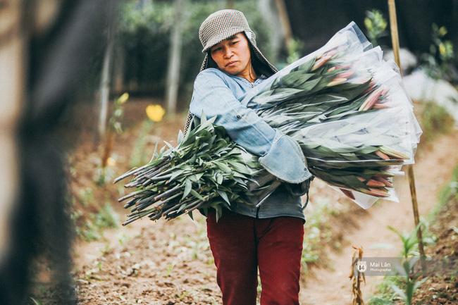 Ly, đào bung nở sớm trước Tết - Người trồng hoa ở Hà Nội điêu đứng, lo phải bán đất để trả nợ ngân hàng - Ảnh 2.