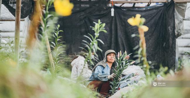Ly, đào bung nở sớm trước Tết - Người trồng hoa ở Hà Nội điêu đứng, lo phải bán đất để trả nợ ngân hàng - Ảnh 7.