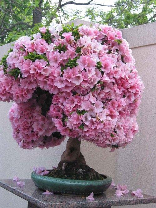 bestie hoa trang tri tet 1
