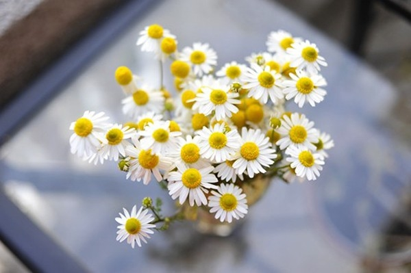 bestie hoa trang tri tet 3