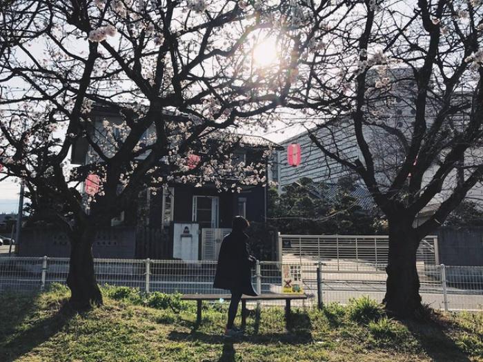 Ra đây mà xem người ta kéo nhau sang Nhật ngắm hoa anh đào hết rồi! - Ảnh 4.