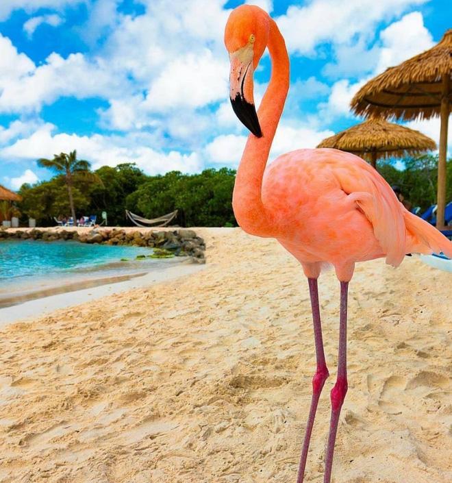Nóng như thế này chỉ muốn đến ngay chốn thiên đường này tắm biển, chụp ảnh sống ảo cùng hồng hạc mà thôi!