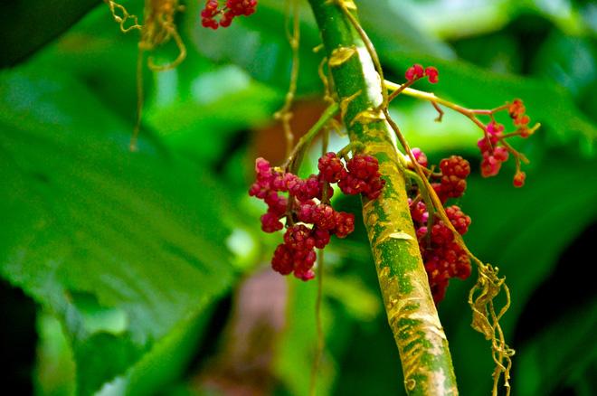 """Loài cây đẹp nhưng cực độc - chạm nhẹ thôi cũng khiến bạn """"sống-không-bằng-chết"""""""