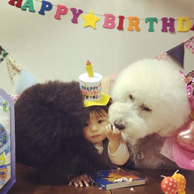 Ngắm nhìn tình bạn đáng yêu của bé gái và chú chó poodle - Ảnh 17.