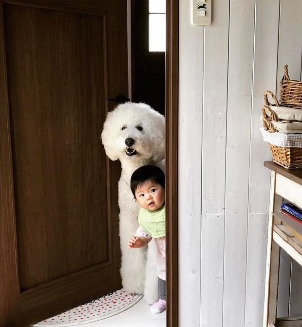 Ngắm nhìn tình bạn đáng yêu của bé gái và chú chó poodle - Ảnh 11.