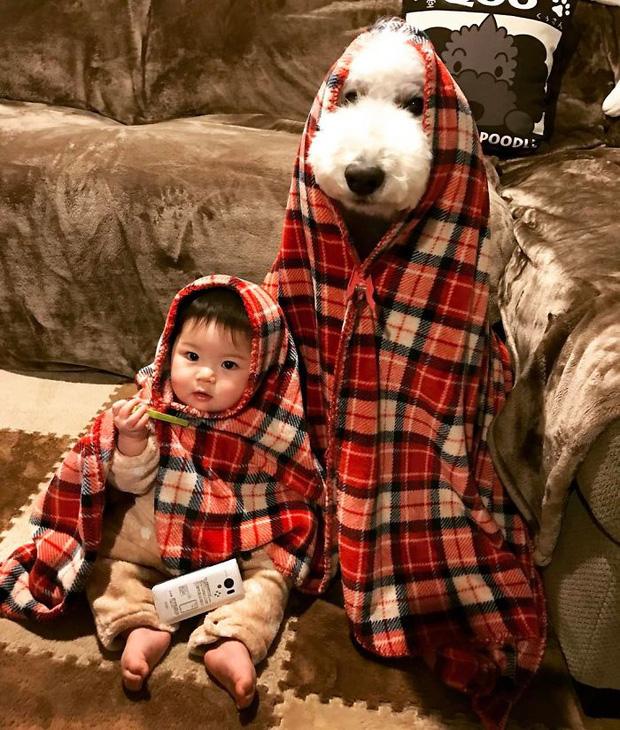Ngắm nhìn tình bạn đáng yêu của bé gái và chú chó poodle - Ảnh 13.