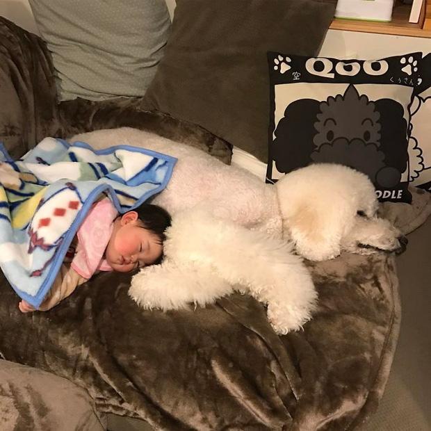 Ngắm nhìn tình bạn đáng yêu của bé gái và chú chó poodle - Ảnh 9.