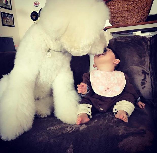 Ngắm nhìn tình bạn đáng yêu của bé gái và chú chó poodle - Ảnh 33.