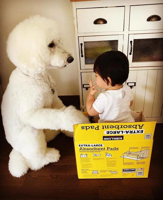 Ngắm nhìn tình bạn đáng yêu của bé gái và chú chó poodle - Ảnh 29.