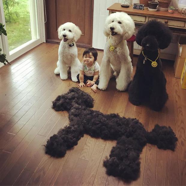 Ngắm nhìn tình bạn đáng yêu của bé gái và chú chó poodle - Ảnh 15.