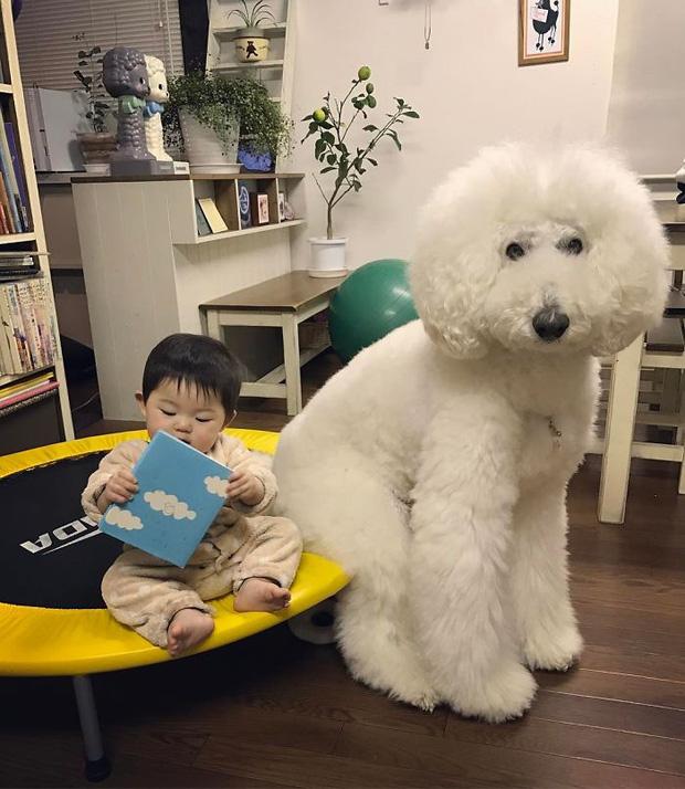 Ngắm nhìn tình bạn đáng yêu của bé gái và chú chó poodle - Ảnh 25.
