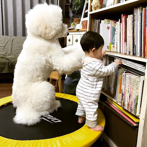 Ngắm nhìn tình bạn đáng yêu của bé gái và chú chó poodle - Ảnh 19.