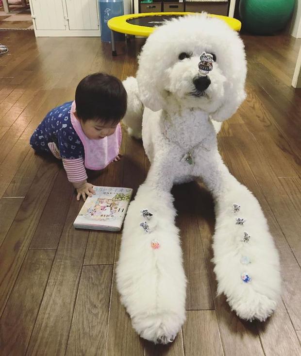 Ngắm nhìn tình bạn đáng yêu của bé gái và chú chó poodle - Ảnh 31.