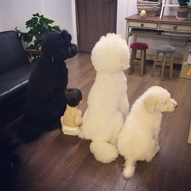 Ngắm nhìn tình bạn đáng yêu của bé gái và chú chó poodle - Ảnh 23.