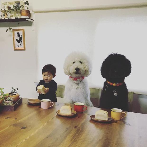 Ngắm nhìn tình bạn đáng yêu của bé gái và chú chó poodle - Ảnh 5.