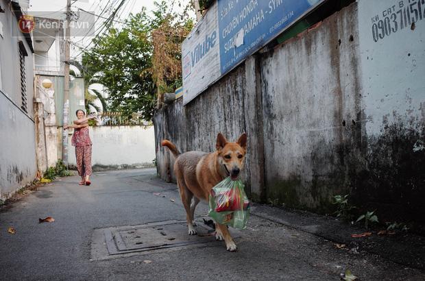 Gặp Gấu - chú chó cá tính nhất Sài Gòn: Chủ mua gì cũng xung phong xách hộ, không cho theo thì hờn mát bỏ ăn! - Ảnh 2.