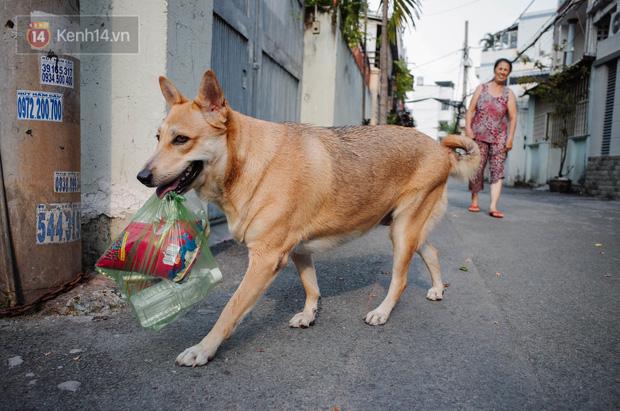 Gặp Gấu - chú chó cá tính nhất Sài Gòn: Chủ mua gì cũng xung phong xách hộ, không cho theo thì hờn mát bỏ ăn! - Ảnh 1.