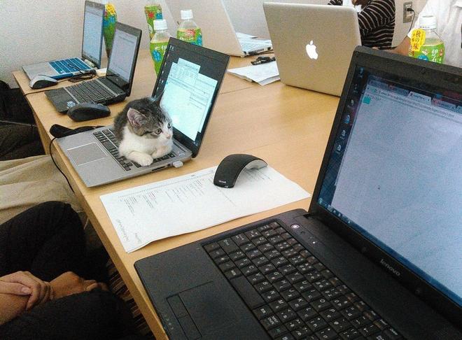 Công ty ở Tokyo đã nhận nuôi rất nhiều chú mèo vô gia cư.