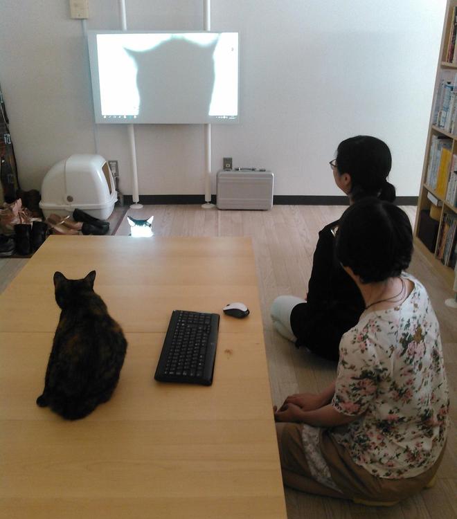 Một chú mèo văn phòng đang điều khiển máy chiếu. Đầu che hết cả màn chiếu rồi.