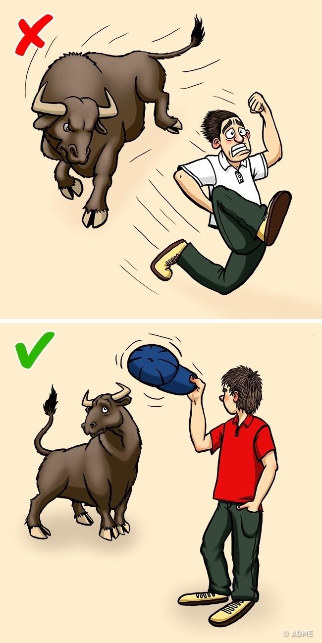 Không may gặp phải động vật hoang dã, hãy sử dụng những kĩ năng sinh tồn này