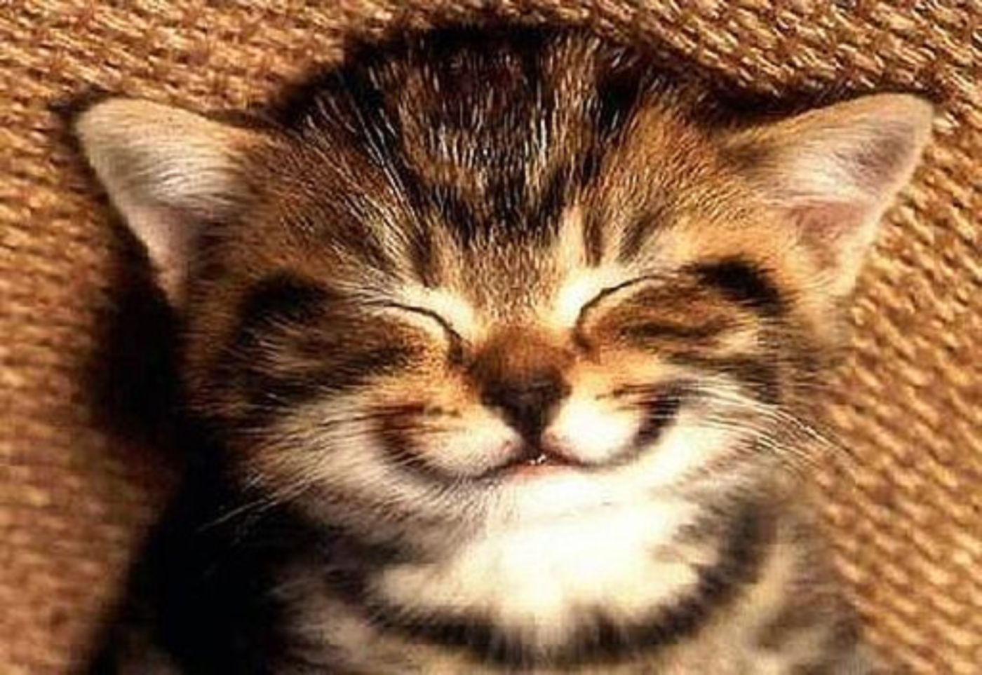 7 thói quen giúp bạn luôn hạnh phúc đã được khoa học chứng minh - Ảnh 5.