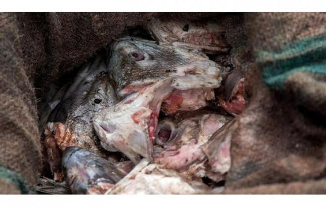 10 đặc sản nổi danh thế giới phải ủ đến bốc mùi, có giòi mới ăn ngon, Việt Nam cũng góp mặt 1 món - Ảnh 12.