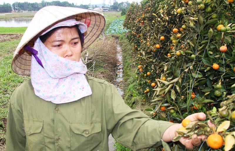 Hình ảnh người nông dân khóc nghẹn bên 450 gốc quất bị phá hoại dịp cận Tết khiến cộng đồng mạng xót xa - Ảnh 2.