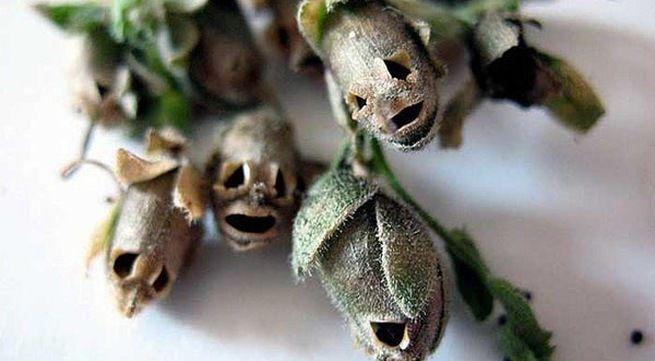 Những loài thực vật kinh dị nhất trên thế giới này