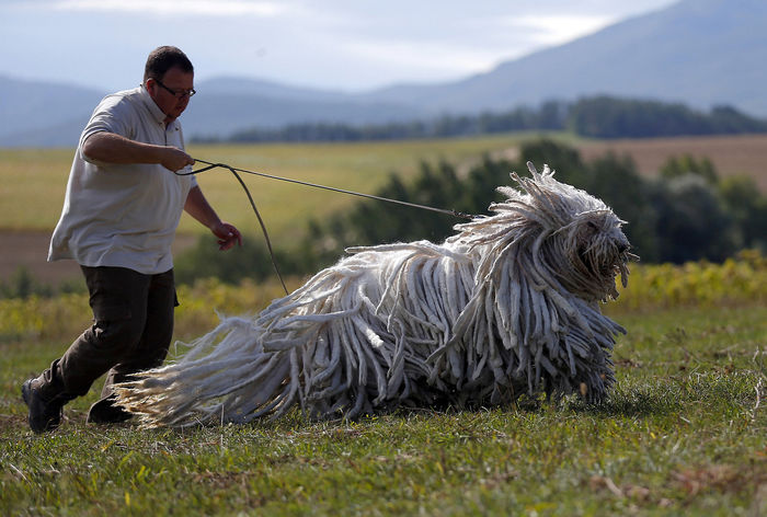10 loài động vật ấn tượng với bộ lông độc nhất thế giới