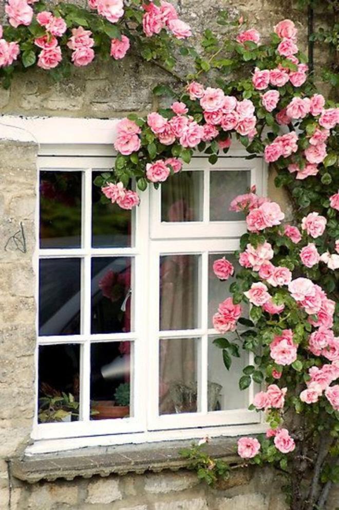 Những bức ảnh này sẽ cho bạn thấy, nhà chỉ cần một khóm hồng, bất kỳ góc nào cũng đều ngọt ngào  - Ảnh 2.