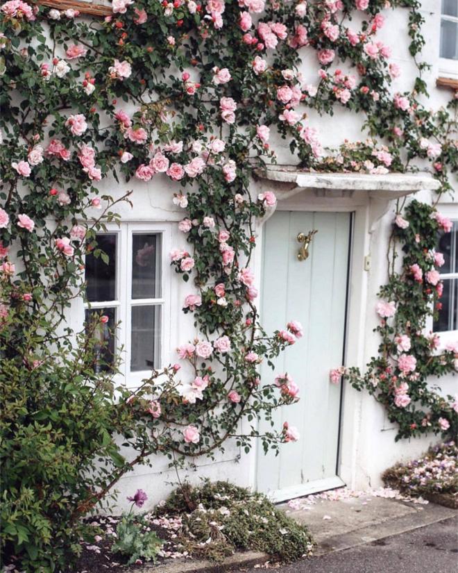 Những bức ảnh này sẽ cho bạn thấy, nhà chỉ cần một khóm hồng, bất kỳ góc nào cũng đều ngọt ngào  - Ảnh 5.