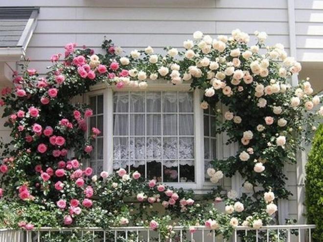 Những bức ảnh này sẽ cho bạn thấy, nhà chỉ cần một khóm hồng, bất kỳ góc nào cũng đều ngọt ngào  - Ảnh 6.
