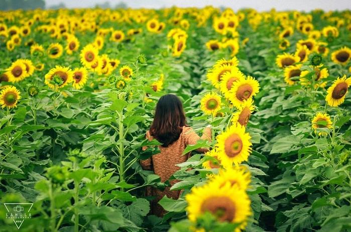 Những cánh đồng hoa hot nhất đang làm xôn xao cộng đồng mạng