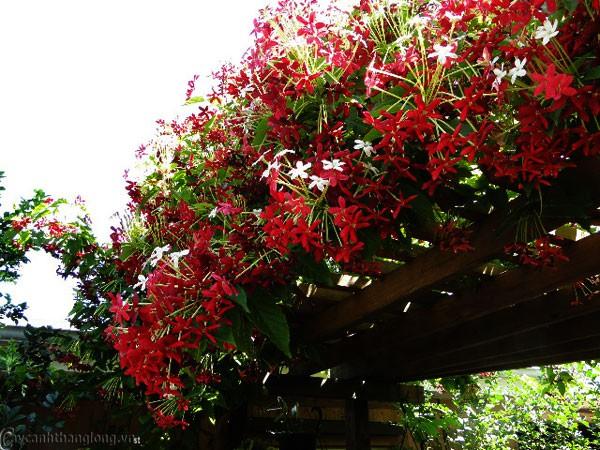 Trồng 7 loại cây có hoa này để ngôi nhà mát lịm trong những ngày nóng như đổ lửa - Ảnh 13.