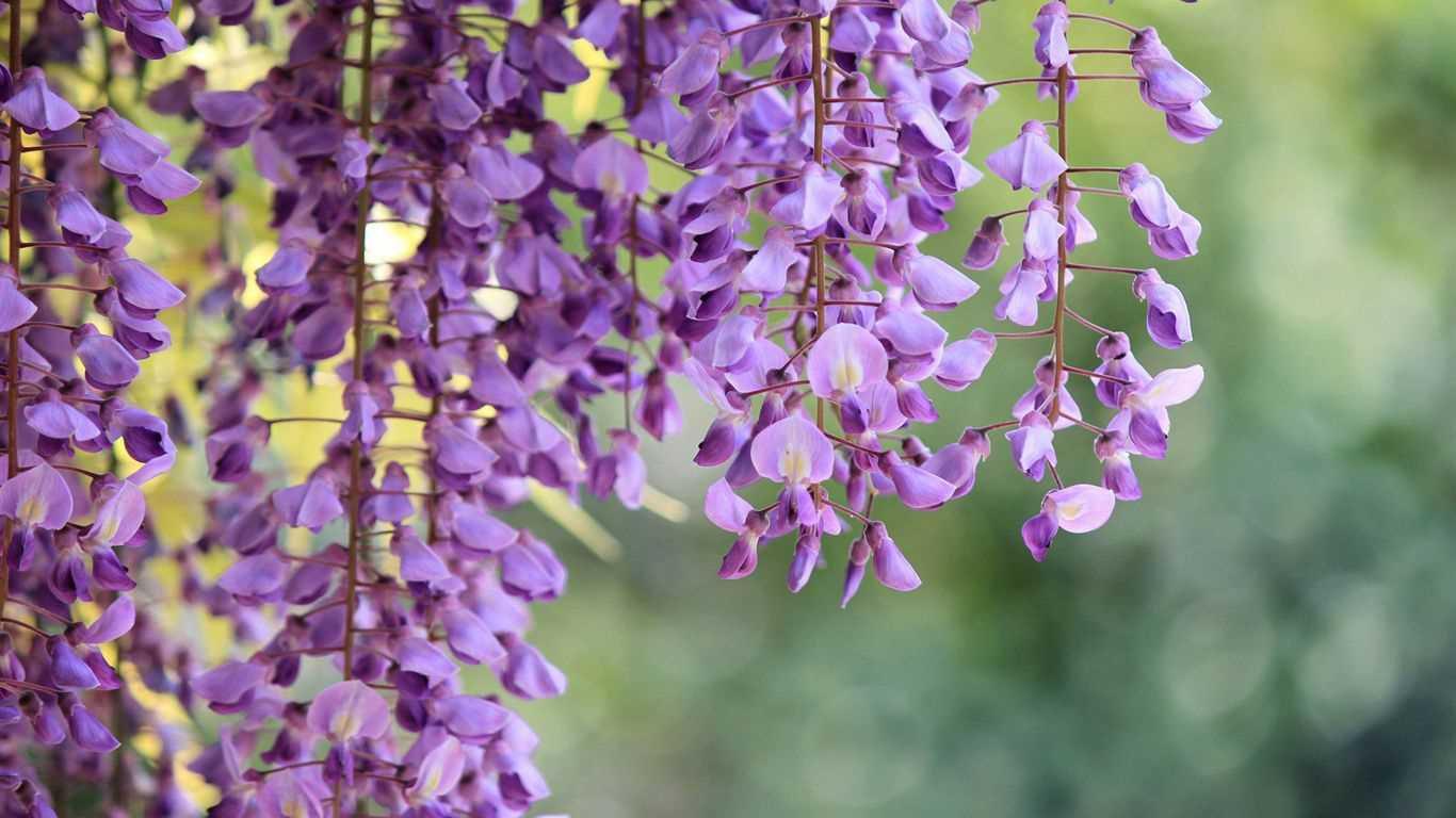 Trồng 7 loại cây có hoa này để ngôi nhà mát lịm trong những ngày nóng như đổ lửa - Ảnh 6.