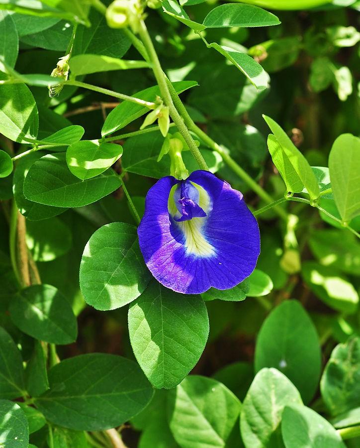 Trồng 7 loại cây có hoa này để ngôi nhà mát lịm trong những ngày nóng như đổ lửa - Ảnh 18.