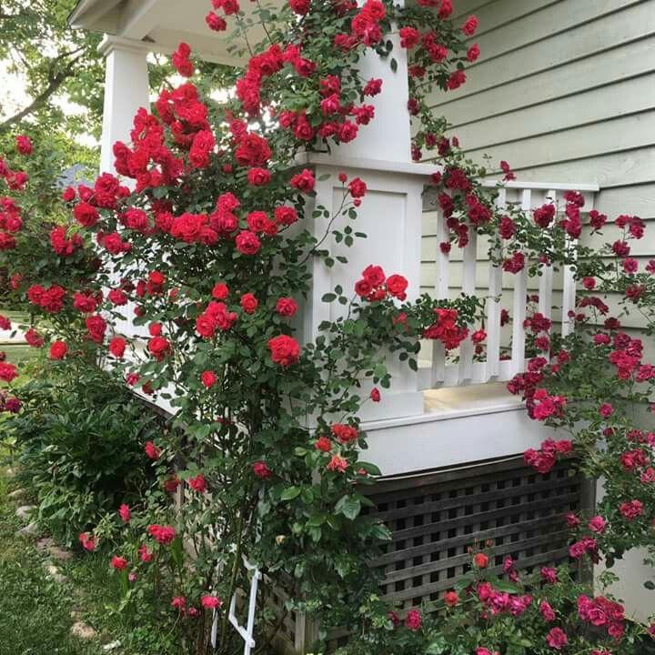 Trồng 7 loại cây có hoa này để ngôi nhà mát lịm trong những ngày nóng như đổ lửa - Ảnh 7.