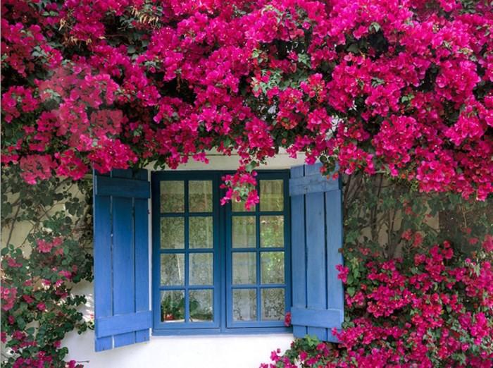 Trồng 7 loại cây có hoa này để ngôi nhà mát lịm trong những ngày nóng như đổ lửa - Ảnh 2.