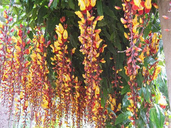 Trồng 7 loại cây có hoa này để ngôi nhà mát lịm trong những ngày nóng như đổ lửa - Ảnh 12.