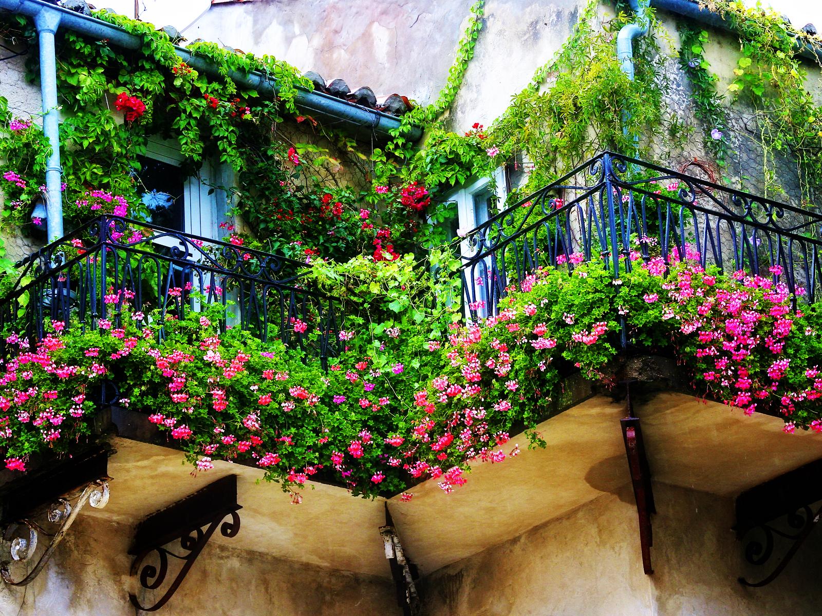 Trồng 7 loại cây có hoa này để ngôi nhà mát lịm trong những ngày nóng như đổ lửa - Ảnh 1.